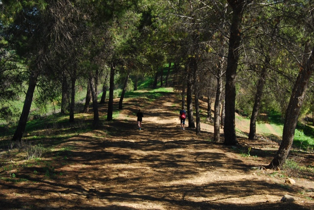 Bonelli Hill Trail