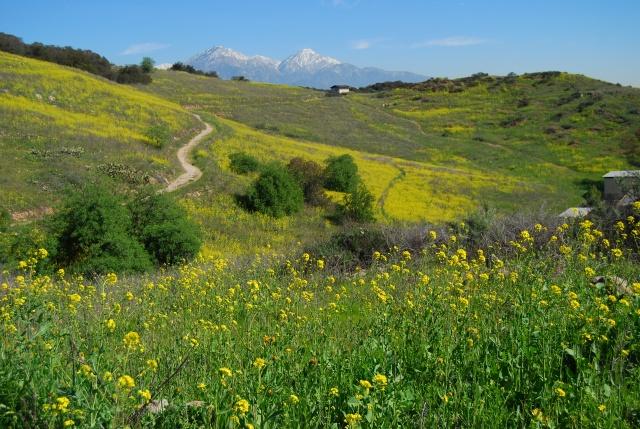 Bonelli Trail