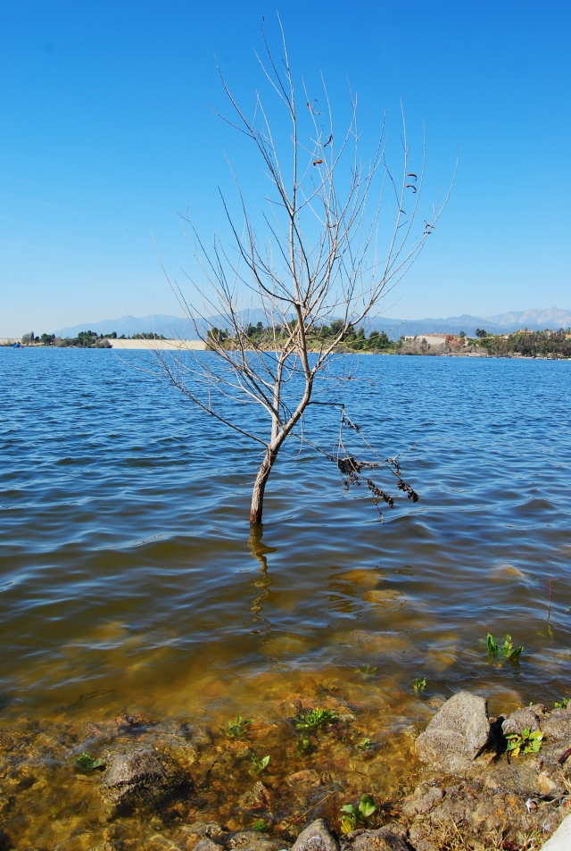 Tree in water